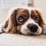 Geburtstagskarte mit Hund online kaufen